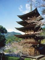 瑠璃光寺五重塔・写真