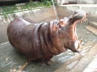 周南市徳山動物園・写真