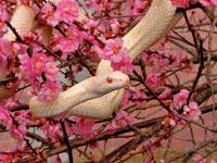 白蛇横山観覧所・写真