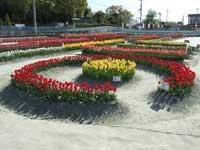 北島チューリップ公園