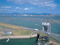 吉野川河口干潟・写真