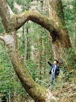 鳥居ケヤキ・写真