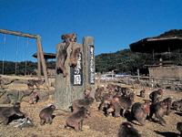 銚子渓自然動物園おさるの国・写真