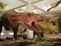 愛媛県総合科学博物館・写真