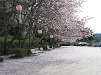 龍岡キャンプ場・写真