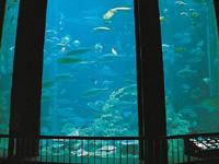 高知県立足摺海洋館・写真