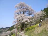 ひょうたん桜公園・写真