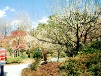 江南山梅林寺外苑・写真
