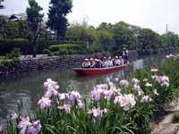 椛島菖蒲園・写真