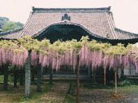 梅岳寺・写真