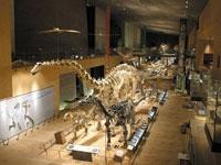 北九州市立いのちのたび博物館(自然史・歴史博物館)・写真