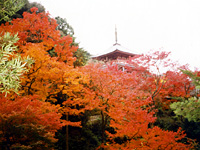 清水寺本坊庭園・写真