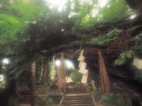 白鳥神社(奥州の蛇藤)・写真