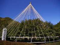 嬉野の大茶樹・写真