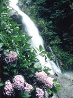 見帰りの滝・写真