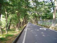 姫の松原・写真