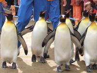 長崎ペンギン水族館・写真