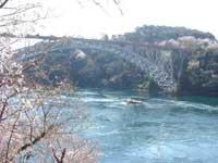 西海橋公園の桜・写真