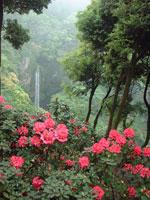 裏見の滝 自然花苑・写真