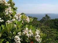 シャリンバイの丘・写真