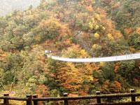 梅の木轟公園吊橋・写真