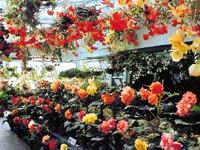 熊本県農業公園カントリーパークのバラ・写真