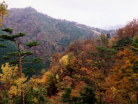 二本杉展望台の紅葉・写真