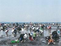 北新地海岸 潮干狩り・写真