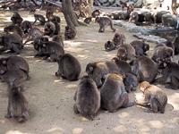 国立公園高崎山自然動物園・写真