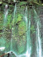 長小野湧水