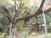 籾山神社・写真