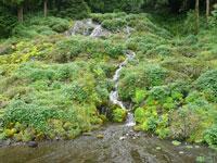 老野湧水の滝・写真