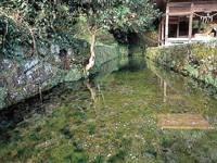 老野湧水・写真