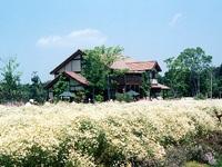 体験型ハーブ農園 大神ファームのカモミール・写真