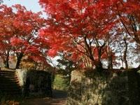 岡城阯の紅葉・写真