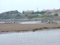 真玉海岸(尾鷲海岸) 潮干狩り・写真