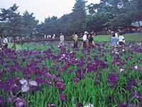 阿波岐原森林公園(市民の森)