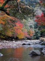 赤池渓谷・写真