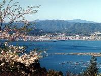 遠見山の桜・写真
