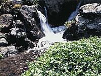 出の山湧水・写真