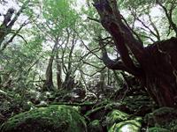 白谷雲水峡・写真