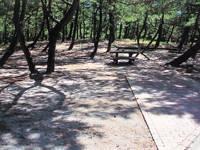 くにの松原キャンプ場・写真
