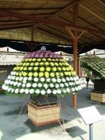 仙巌園(磯庭園)のキク・写真