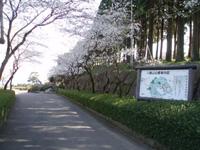 八重山公園・写真