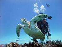 奄美ダイビングスクール はげまりーん・写真