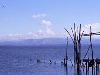 八郎潟調整池・写真