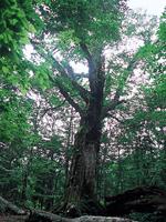 岳岱自然観察教育林・写真