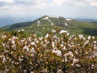 高松岳・写真