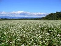 湯の台高原そば畑