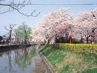 鶴岡公園・写真
